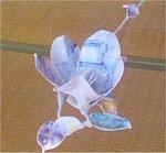 daichi005.jpg